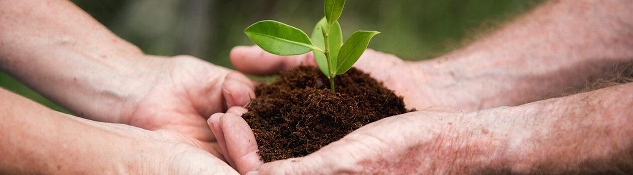 Environmental Sustainability at Safeway